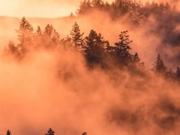 Trees and smoke.